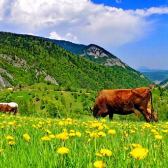 Day trip to Carpathian Mountains